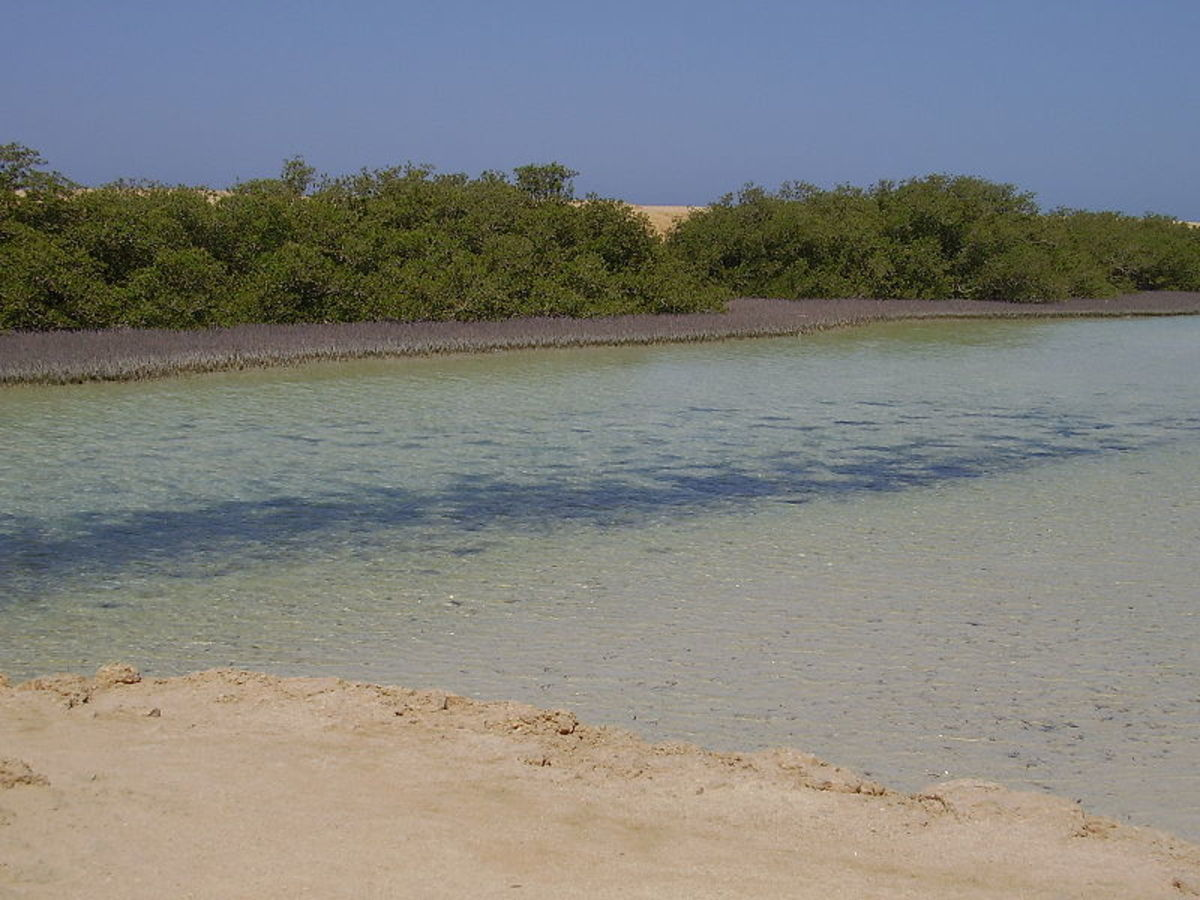 Mangroves in the Ras Mohammed National Park, Sinai, Egypt.