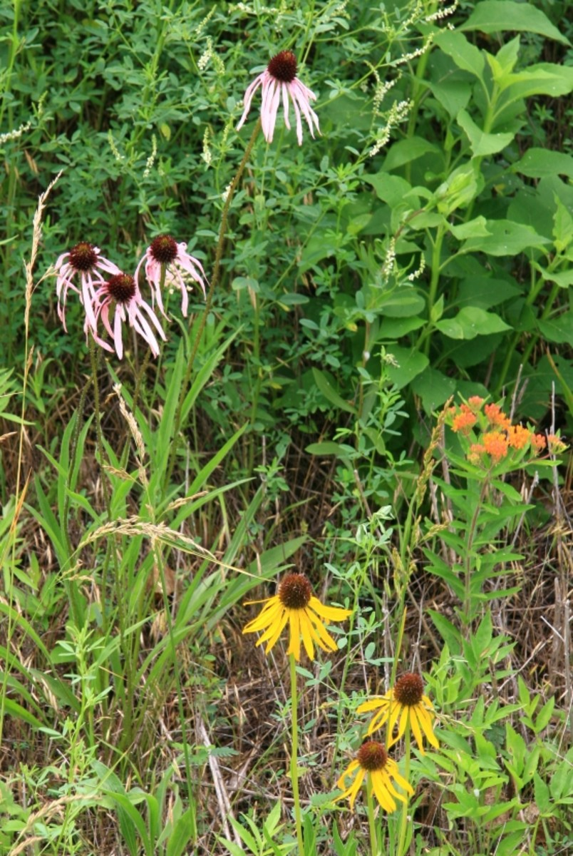 prairie-garden-flowers