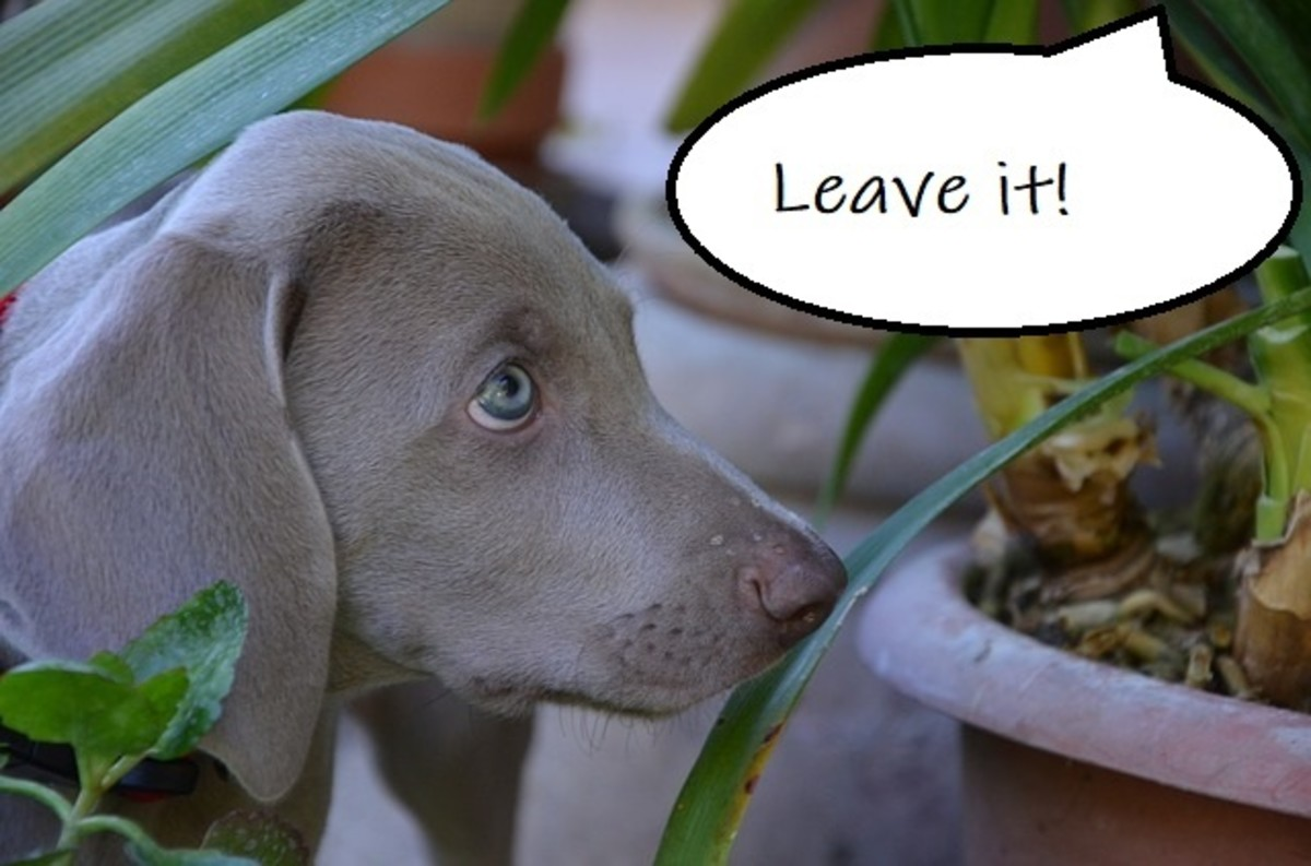 """The """"leave it"""" cue can save you a lot of heartaches."""
