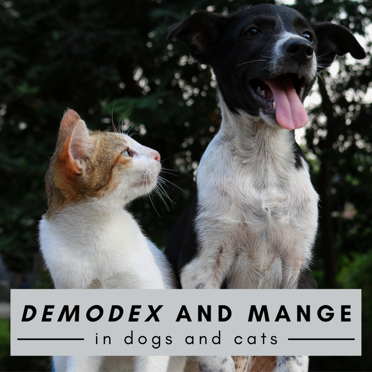 Some mite species from the genus Demodex can cause symptoms of mange in dogs and cats.