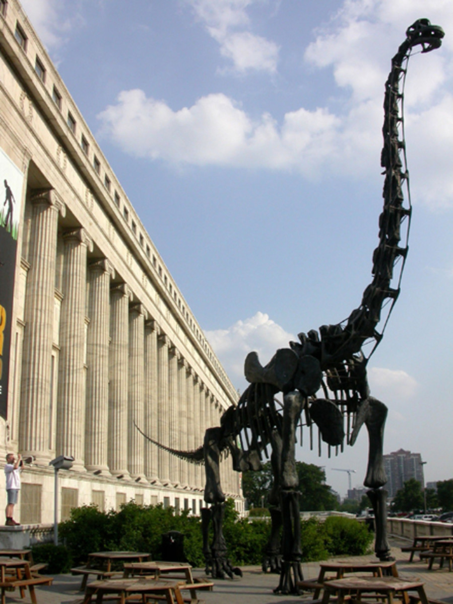"""The """"Evolving Planet"""" exhibit at the Field Museum takes visitors through a journey of 4 billion years of life of Earth."""
