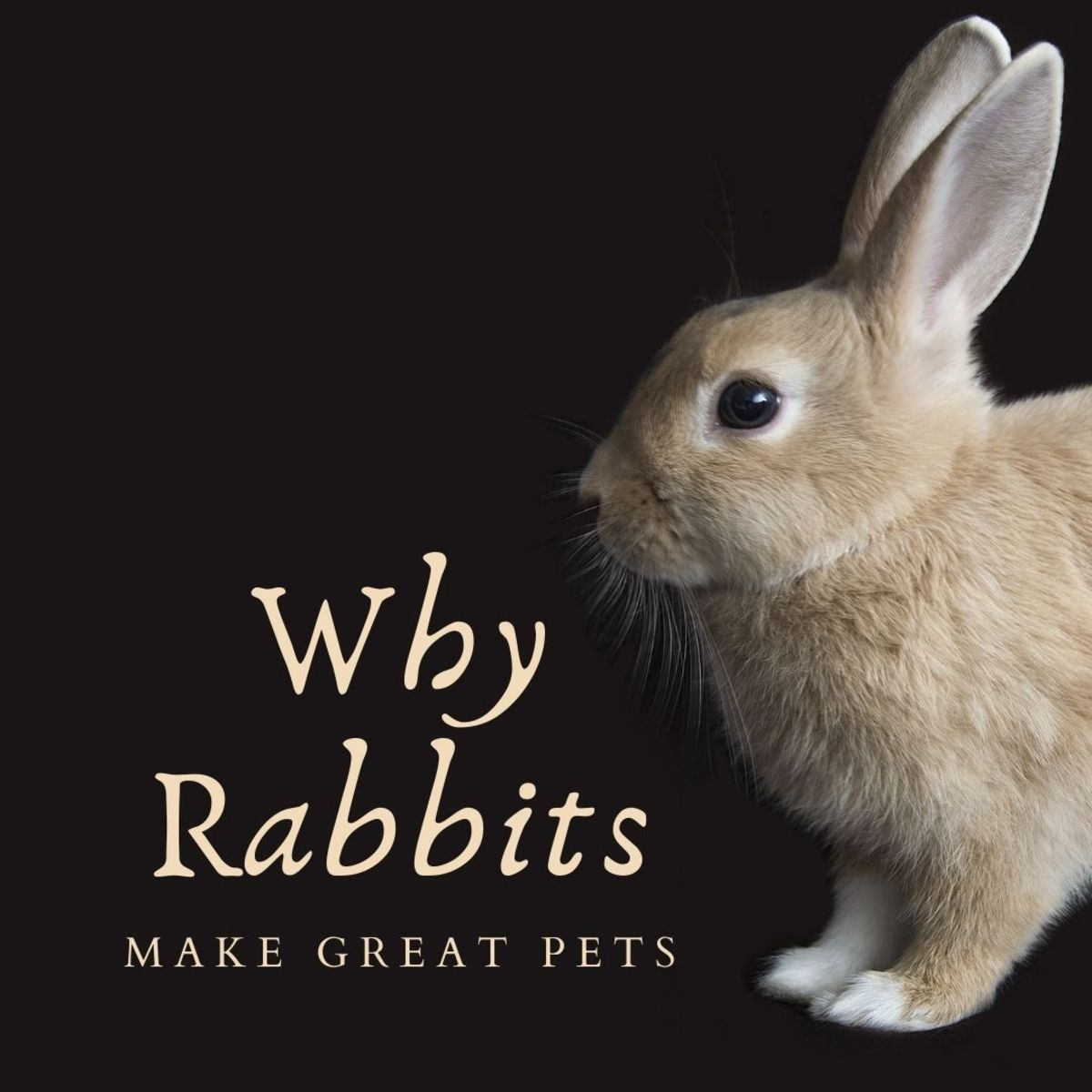 Why rabbits make great pets year-round, not just for Easter