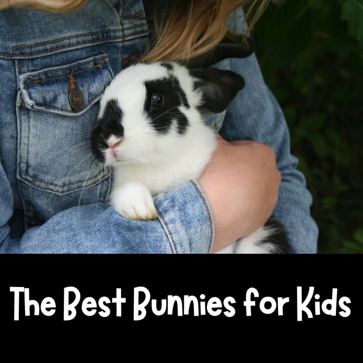 What Are the Best Bunnies for Children?