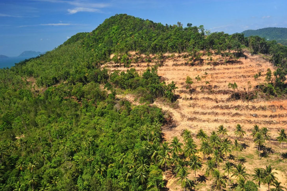 Destruction of the world's forests is leading to a  widespread desertification of the earth's soil and mass extinction of species.