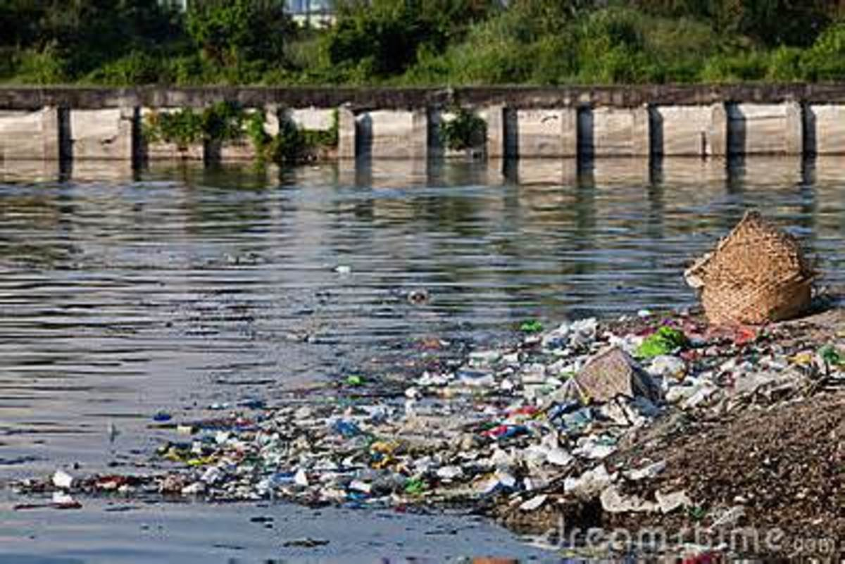 Water pollution is causing harmful effects on all forms of aquatic life.