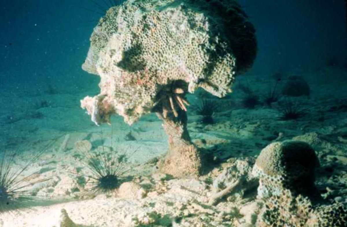 Coral destruction