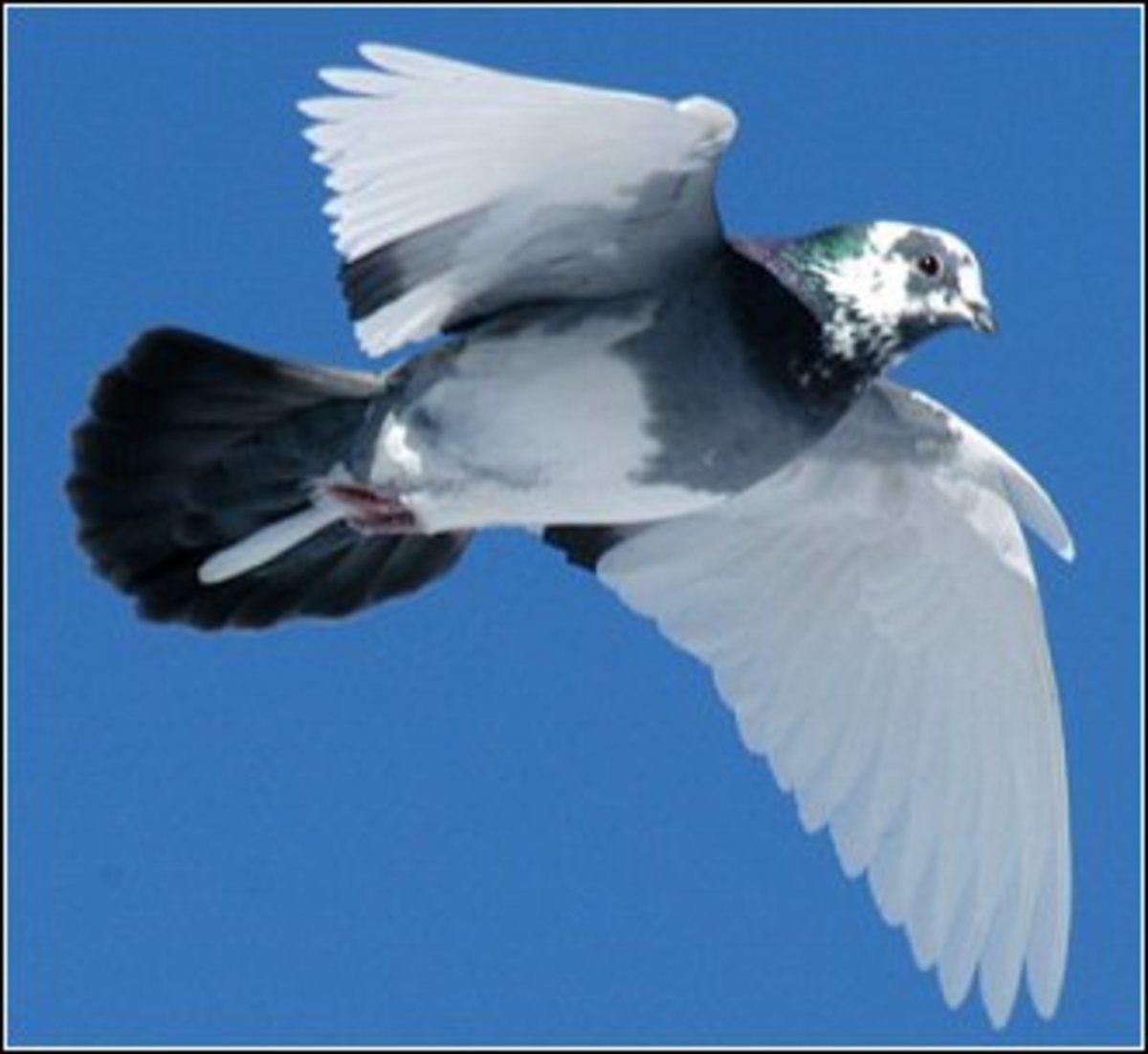 birdrescue2