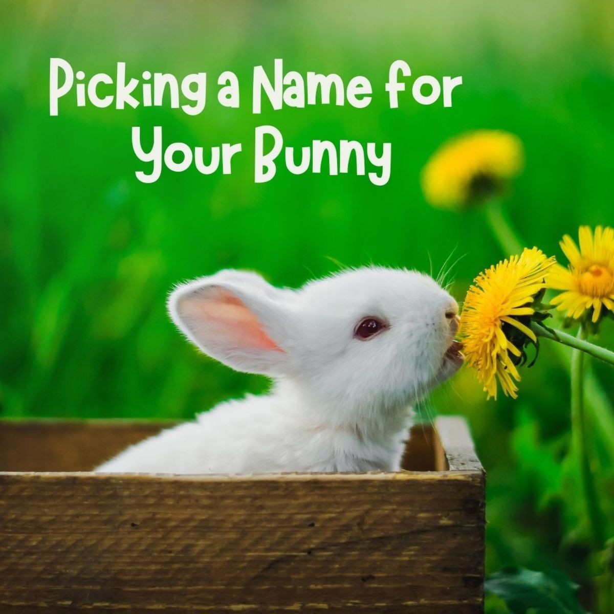 Cottontail, Flopsy, Peter, or Whiskers? Choosing a name for your bunny can be a challenge—here are some ideas to inspire you!