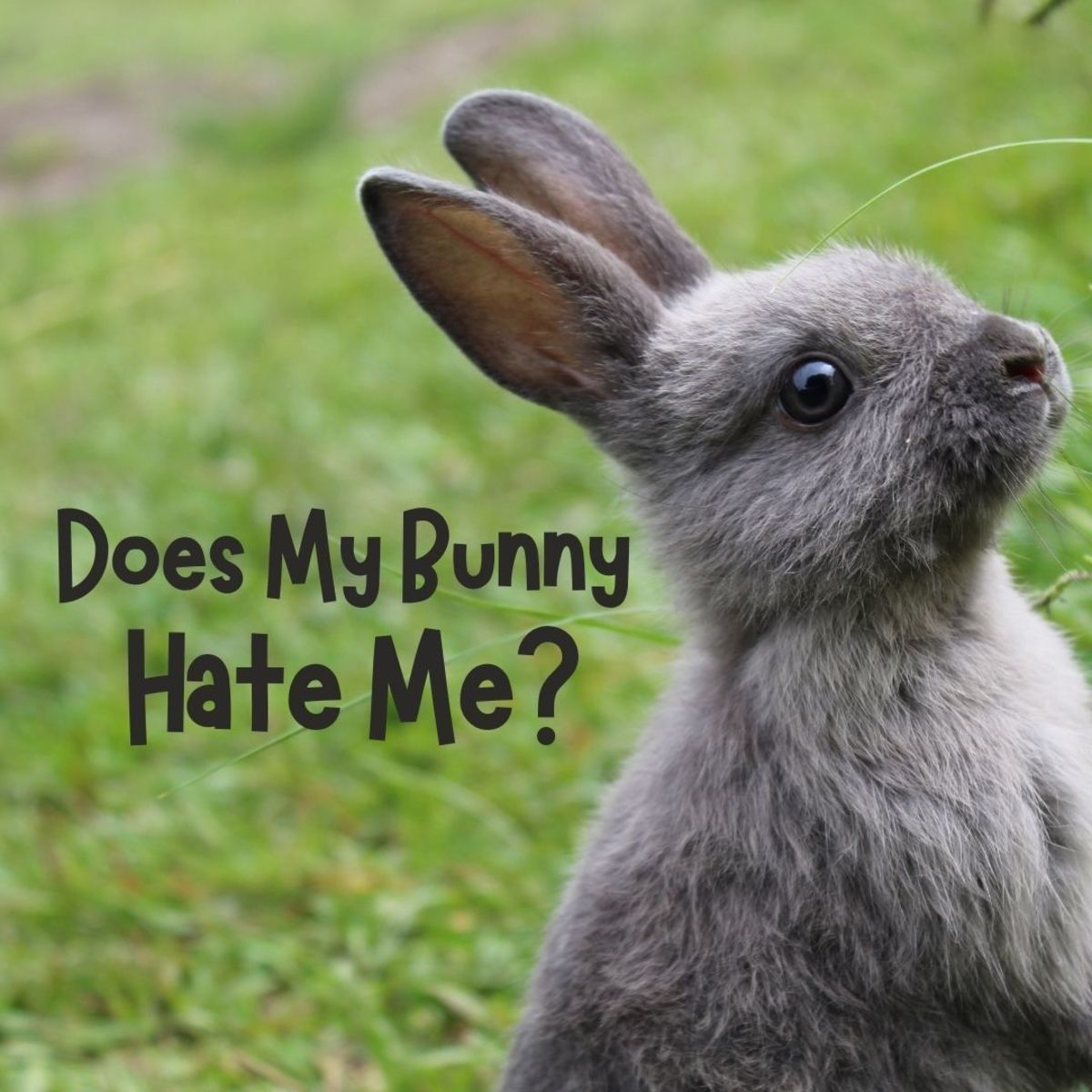 Why is your rabbit acting like she doesn't like you?