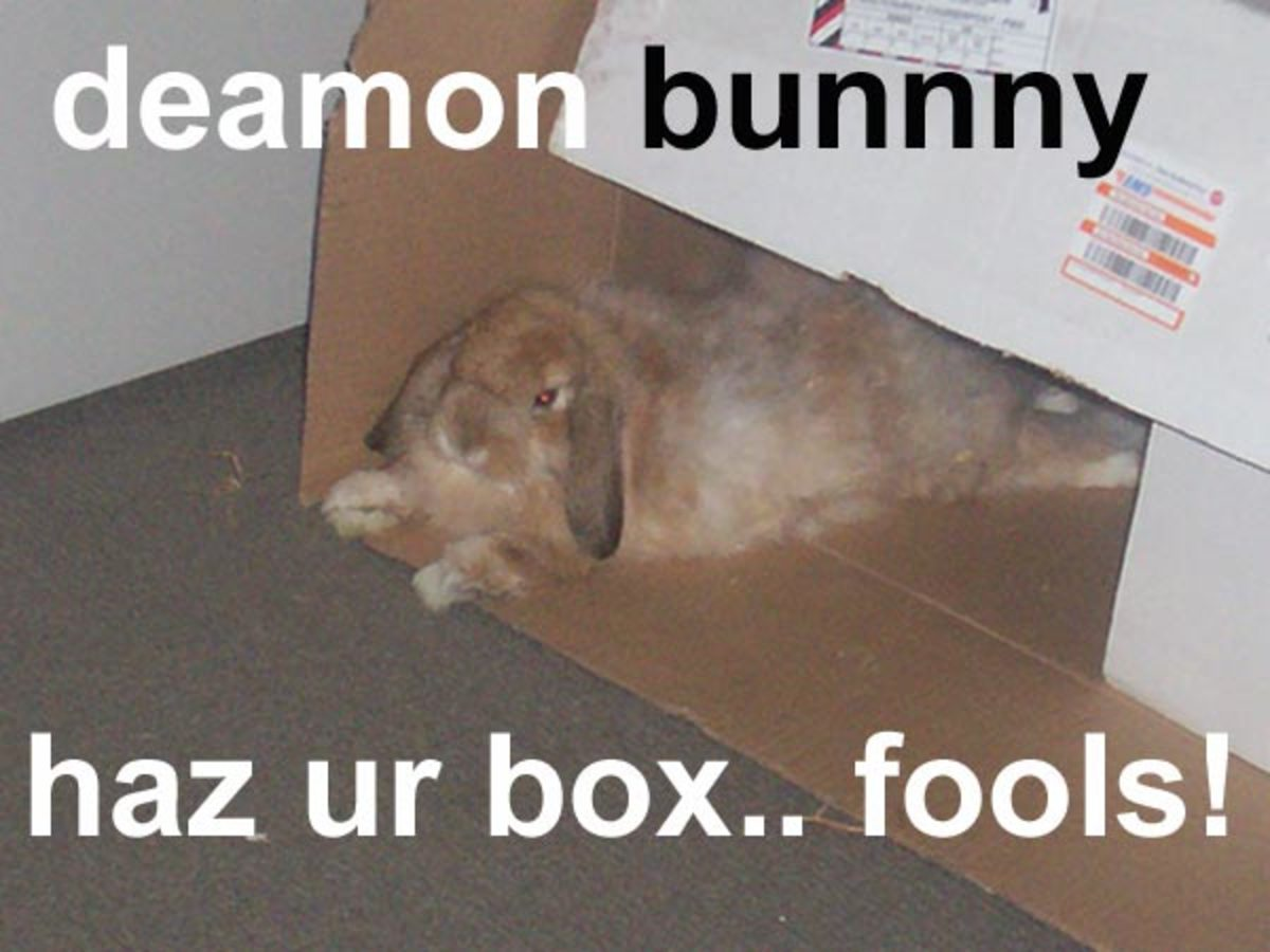 Yes, Your Rabbit Hates You (How To Be Friends With Your Bunny) | PetHelpful