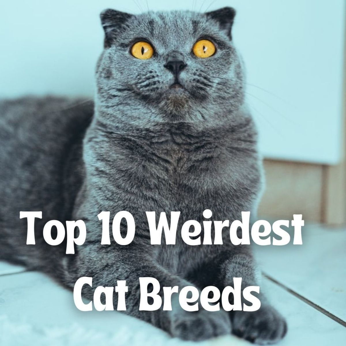 Read ahead to learn about some of the world's strangest kitties.