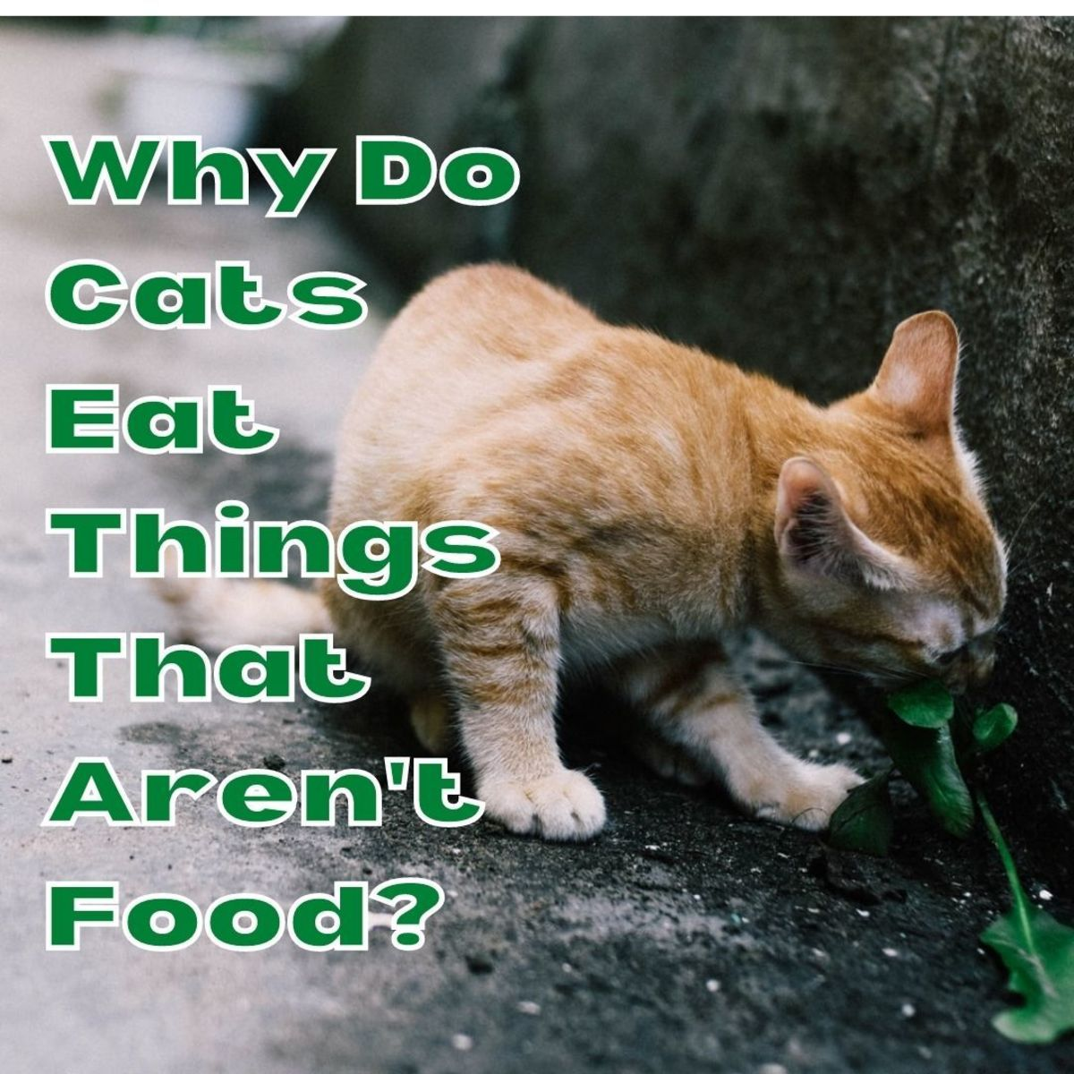 Do you ever wonder why cats eat inedible things, and if there's anything that you can do about it?