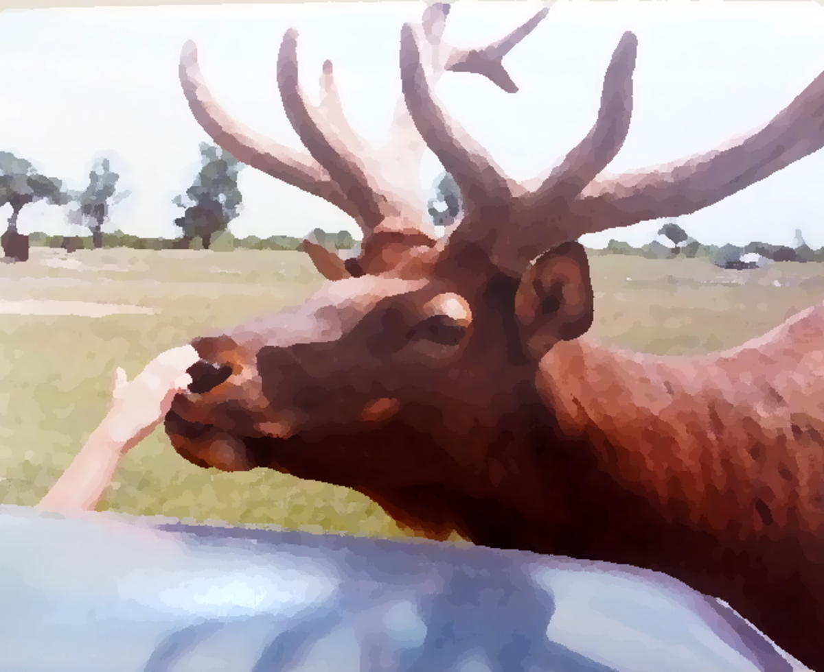 Really old deer photo to oil painting. Taken before digital cameras and cell phones.