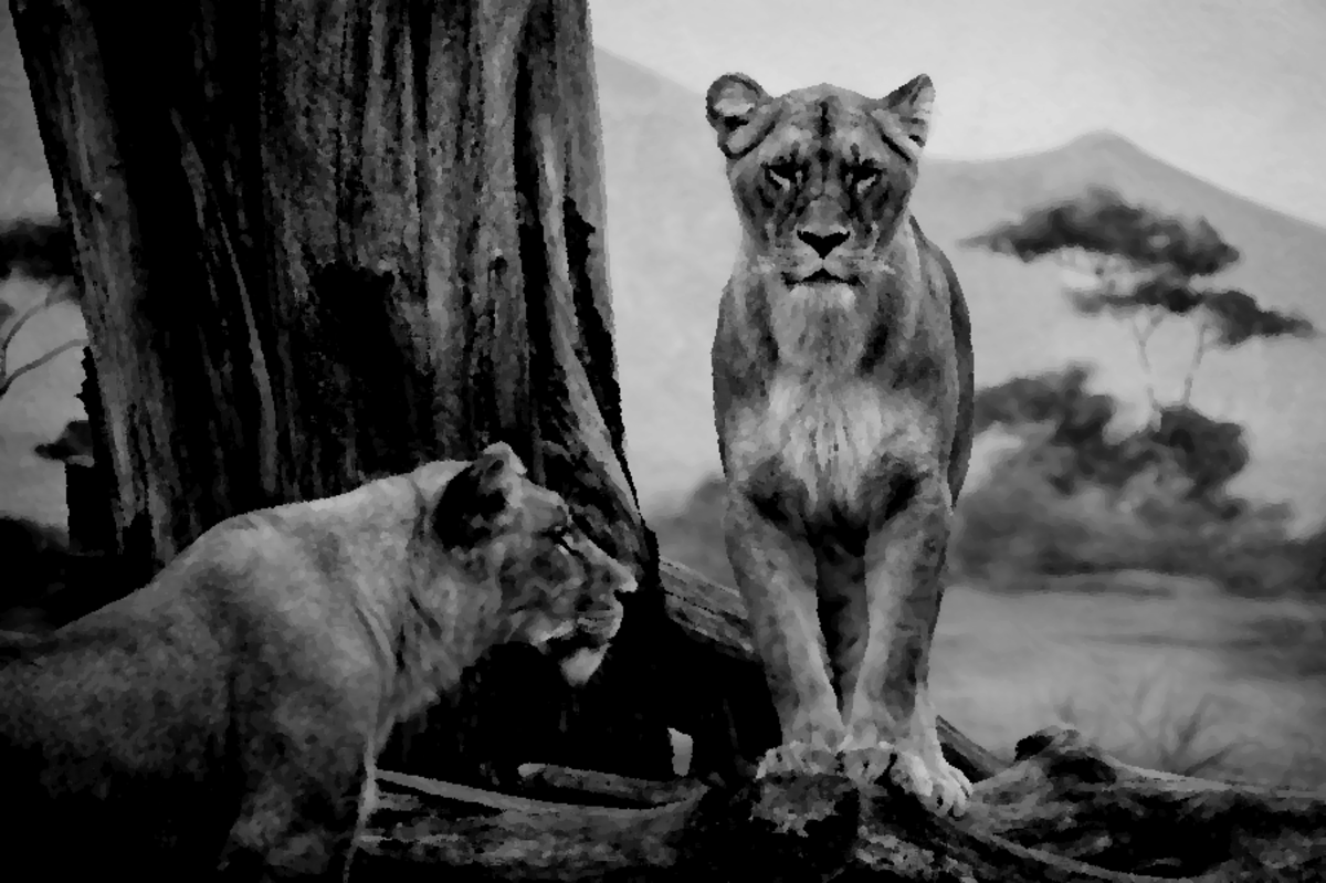 Charcoal drawing effect on a lion photo.
