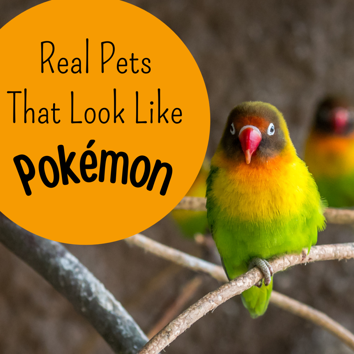 Have you always dreamed of owning a Pokémon? Learn about some real-life exotic pets that resemble characters from the series.