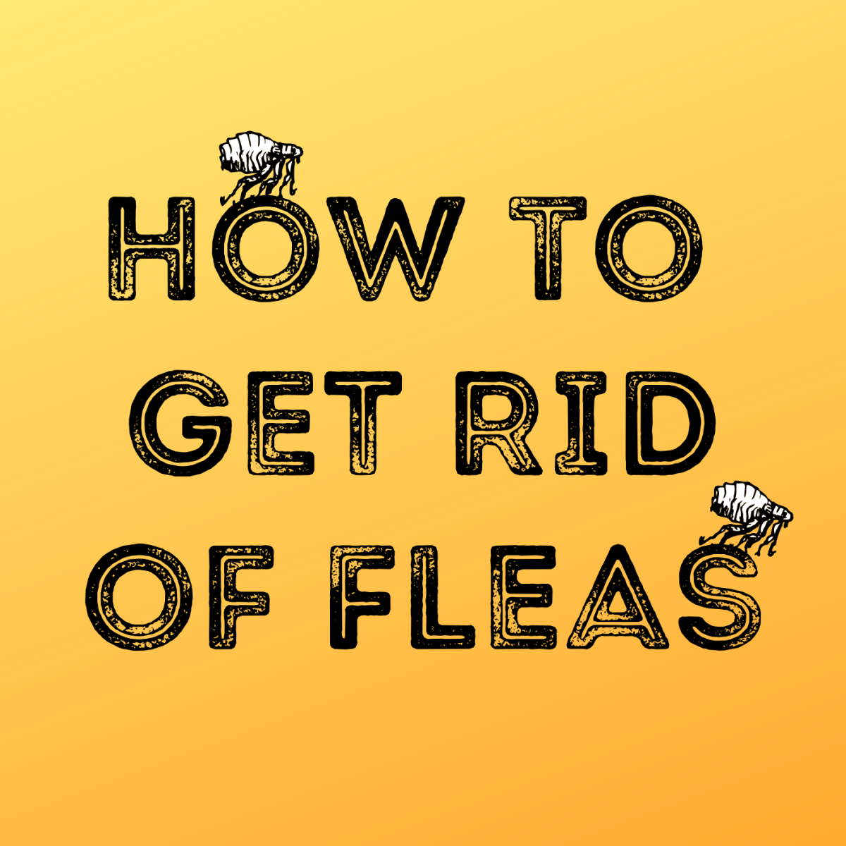 Read about my experience with a flea infestation and how I got rid of them.