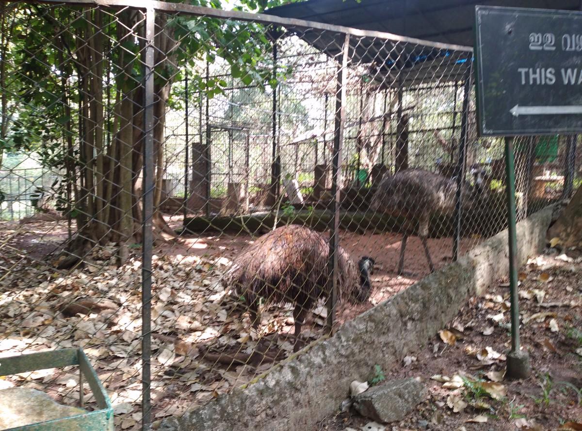 Pic of Emu