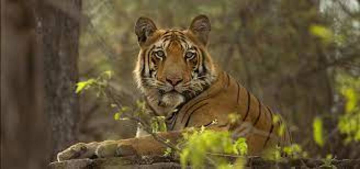 some-notes-on-the-wildlife-animals-of-pakistan