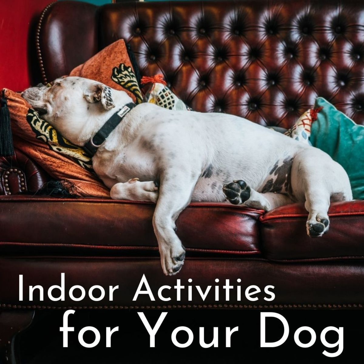What do you do with your canine buddy if you're both stuck indoors for the day?