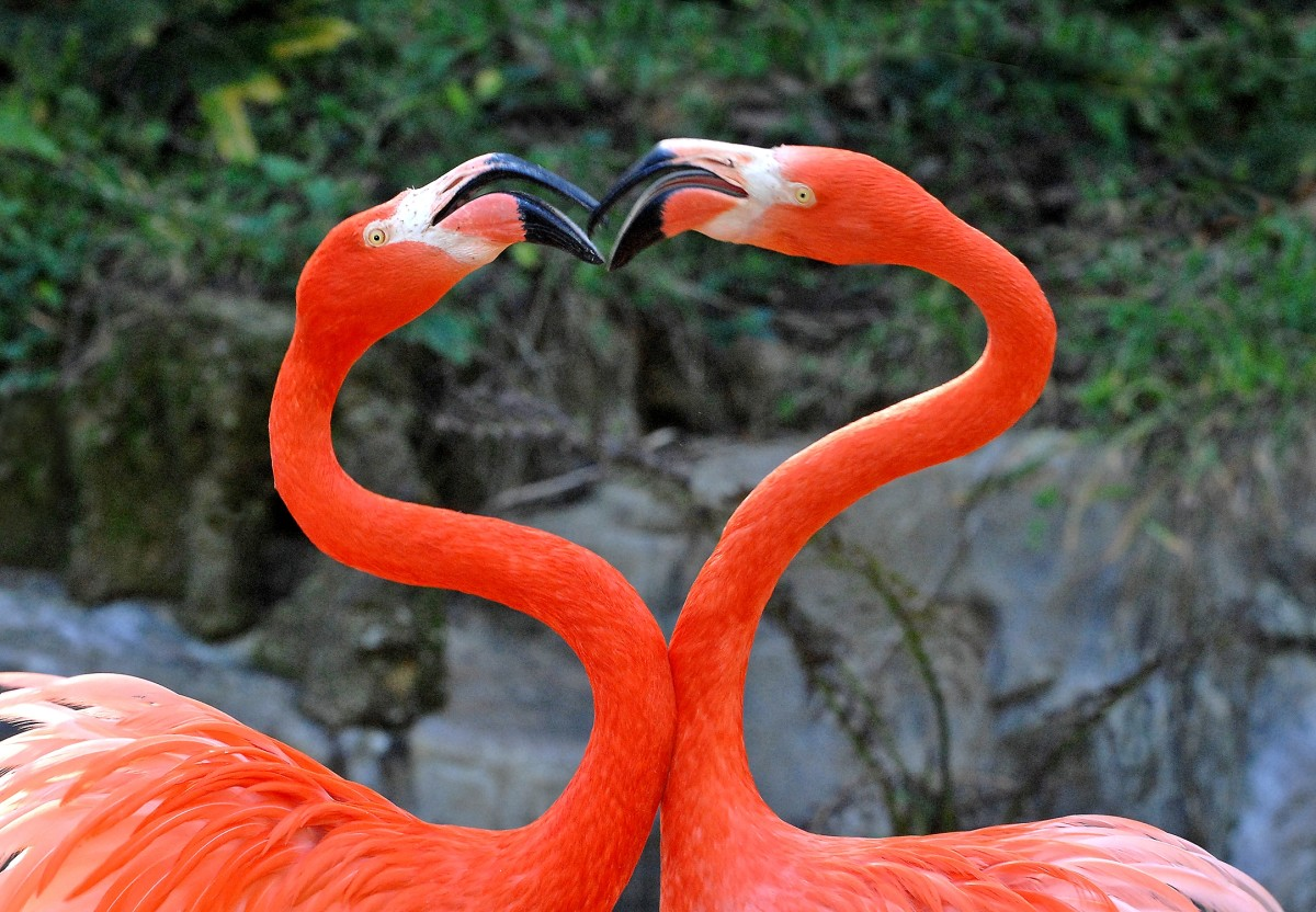 Flamingo Love at the Zoo