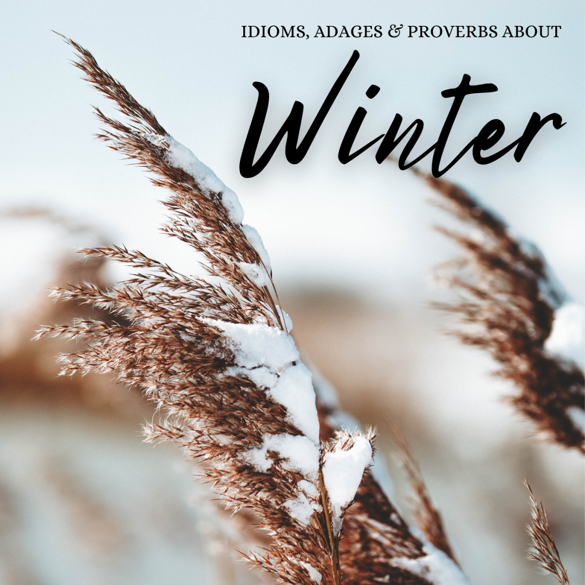 A surprising number of expressions, idioms, and turns of phrase have been created about the winter season over the years.