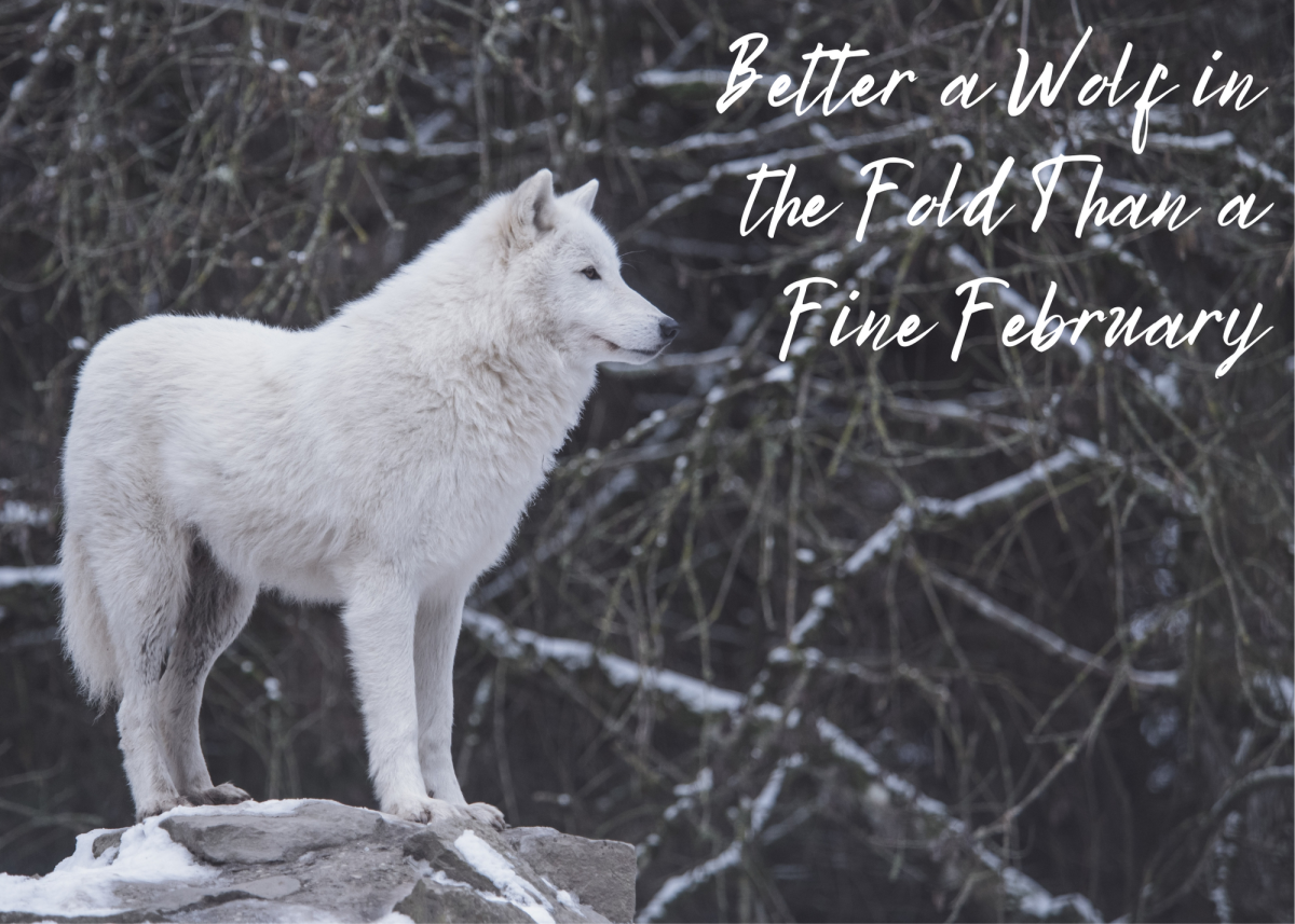 Better a Wolf in the Fold Than a Fine February