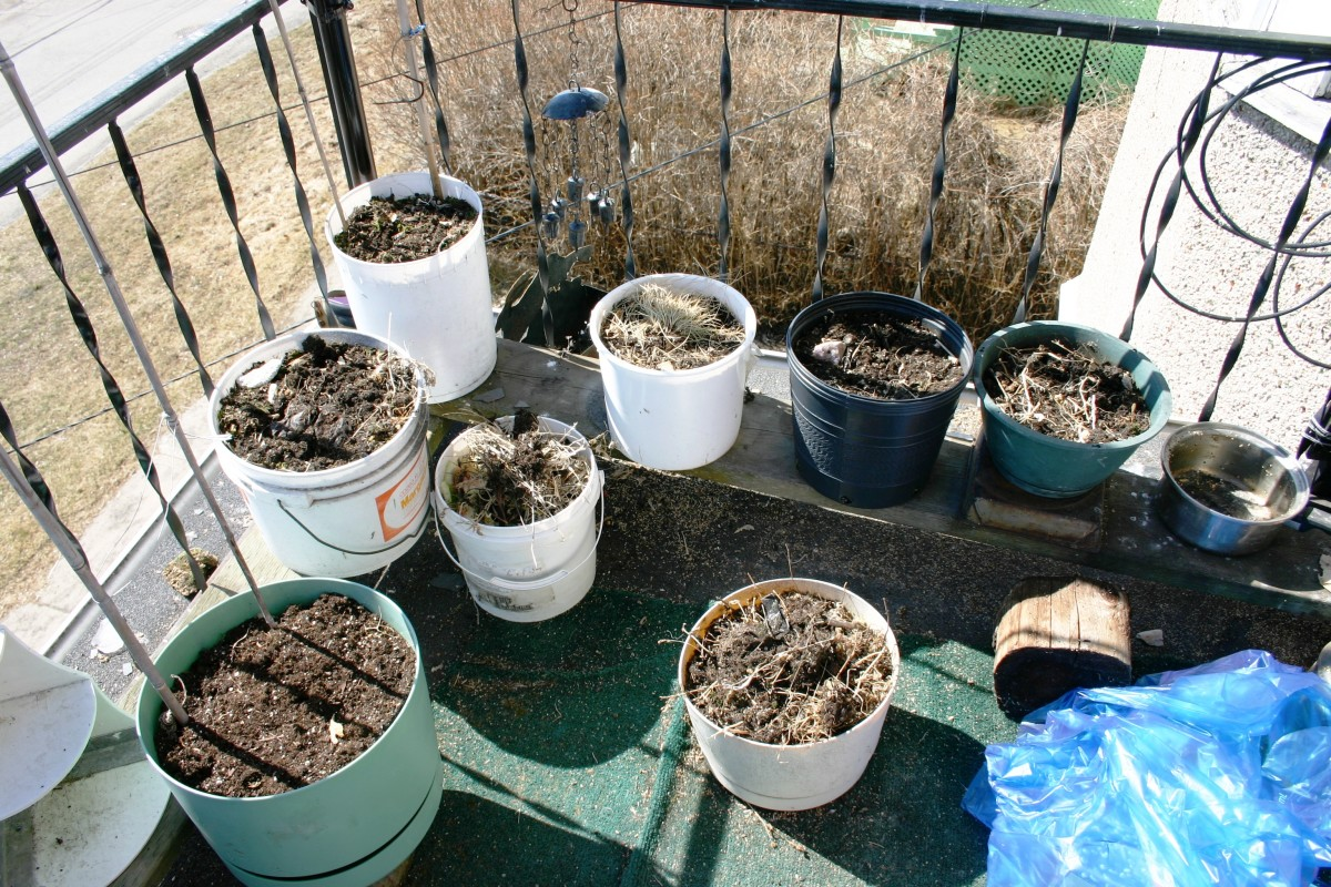 Getting ready to plant: Bob Ewing photo