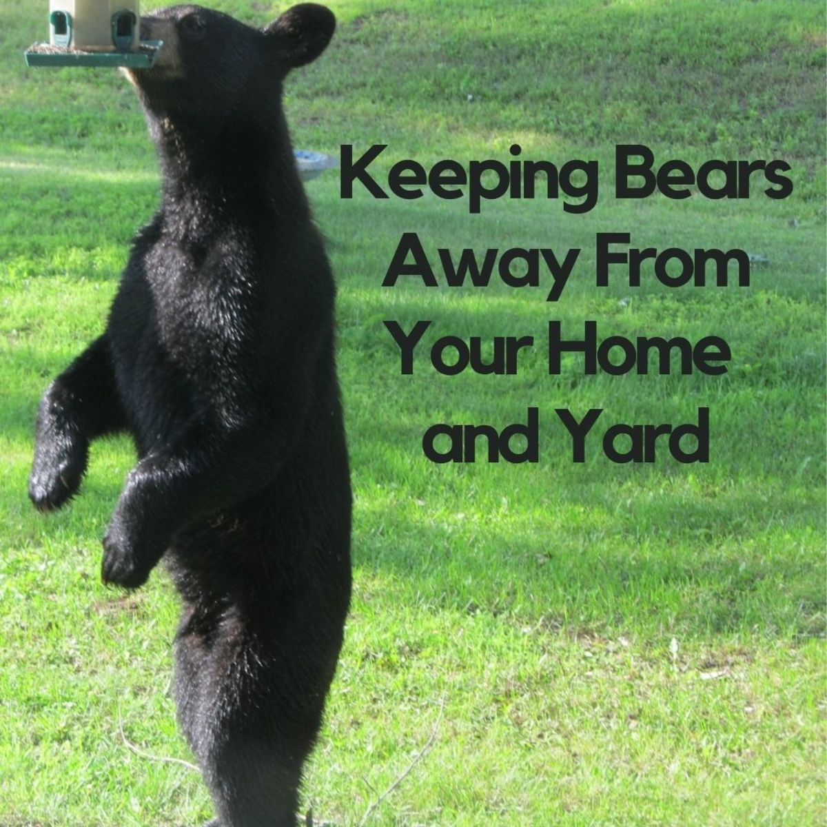Tips and tricks for keeping bears away from your house and yard