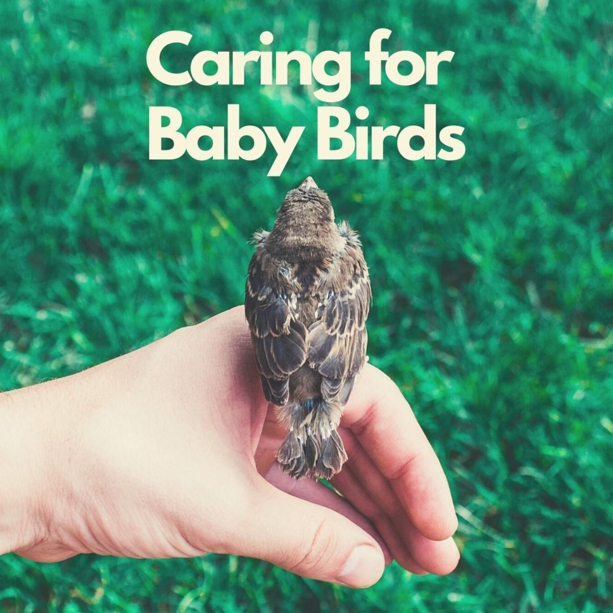 Found a wild baby bird? Here's how you can feed and care for it.