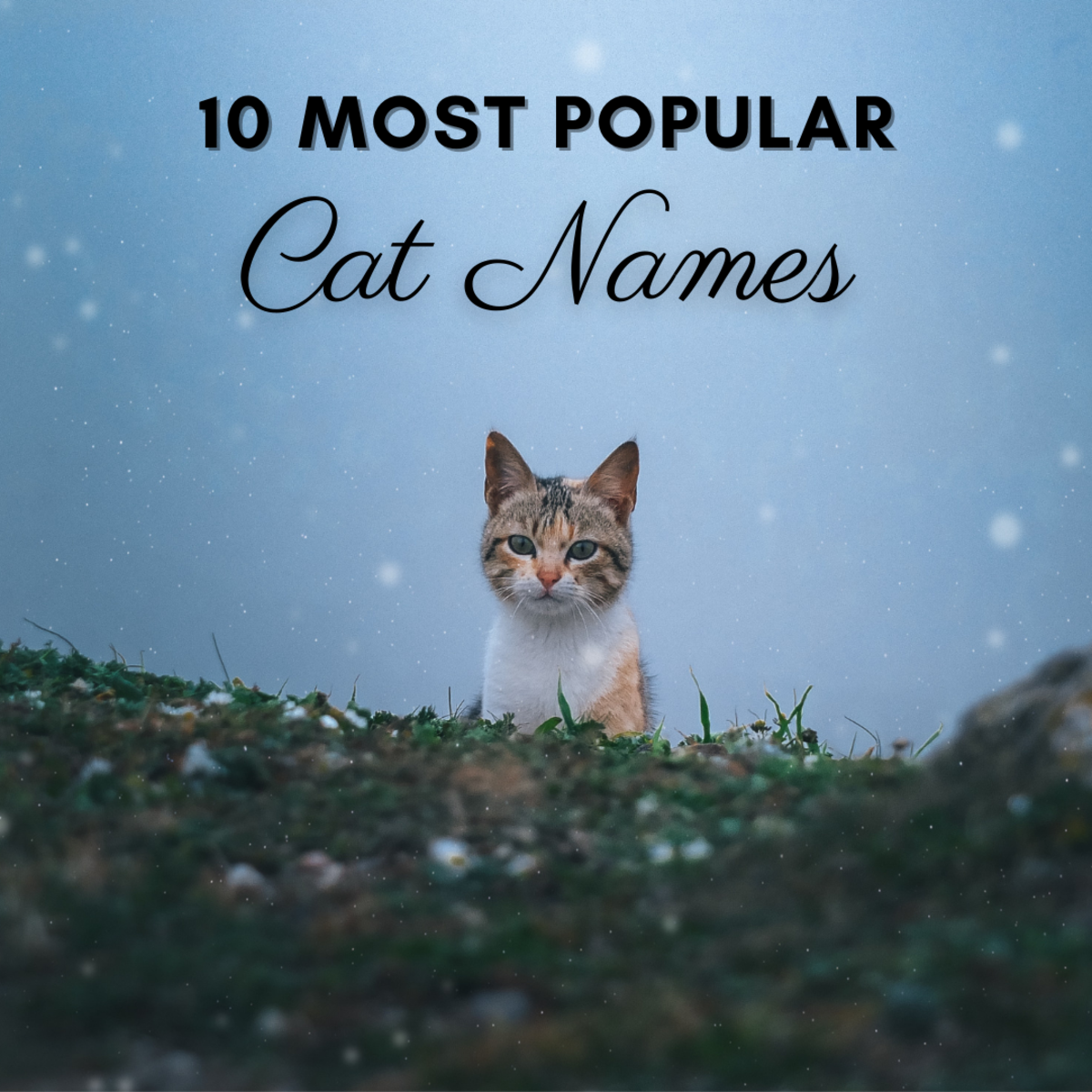 This article will explore 10 of the most popular unisex cat names to hopefully provide you with some inspiration!