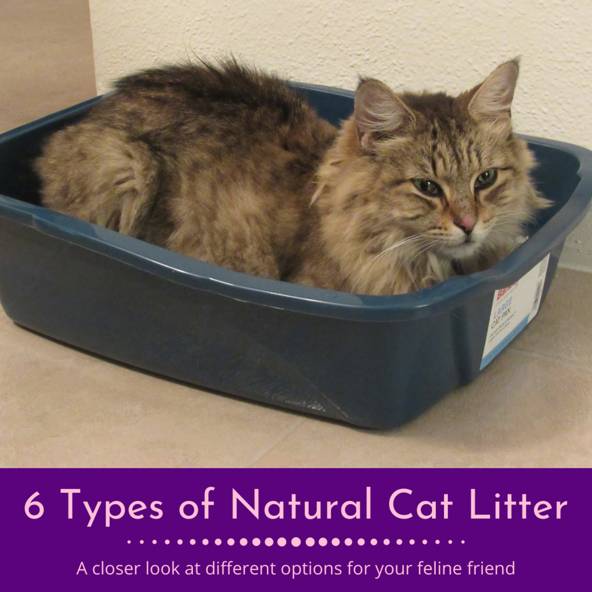 This article will take a closer look at your different options for natural cat litters.