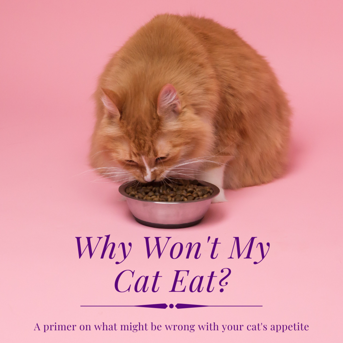 This article will take a deeper look at some of the reasons why your cat may not be eating.