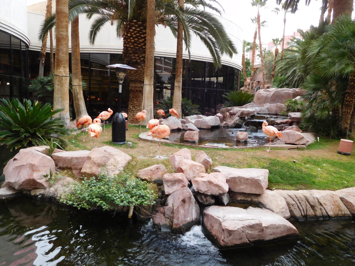 The Flamingo Habitat at the Flamingo Hotel in Las Vegas, Nevada