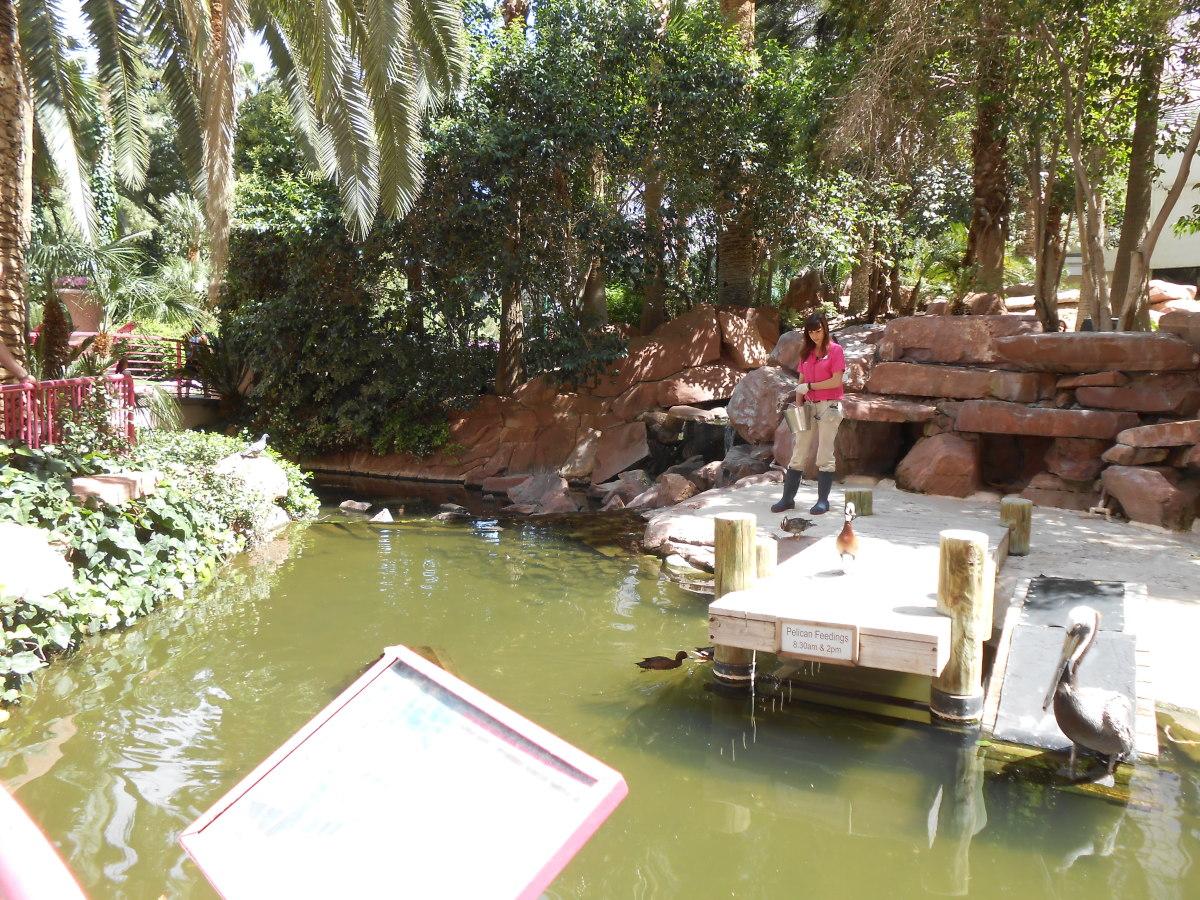 Feeding the pelicans at the Flamingo Wildlife Habitat