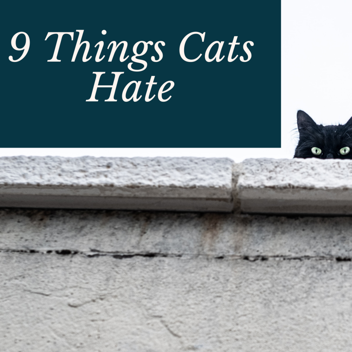 9 Things You Are (Probably) Doing That Upsets Your Cat