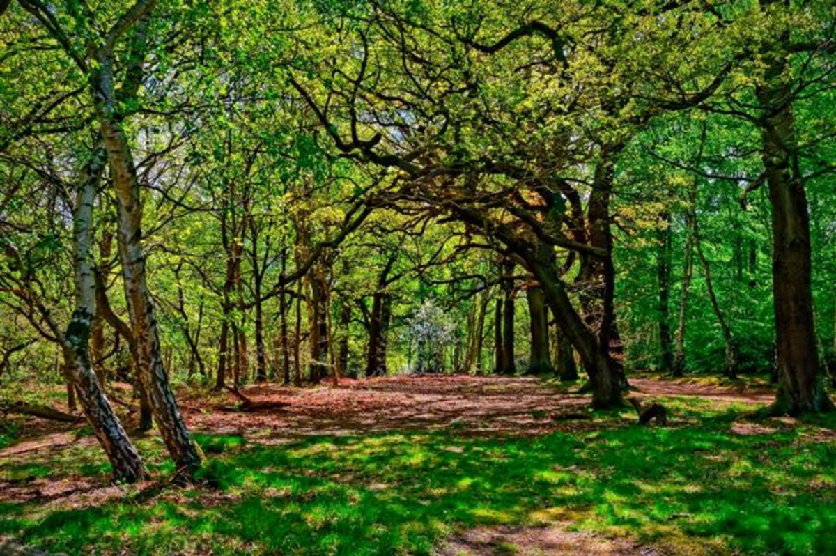 The Sherwood Forest Today