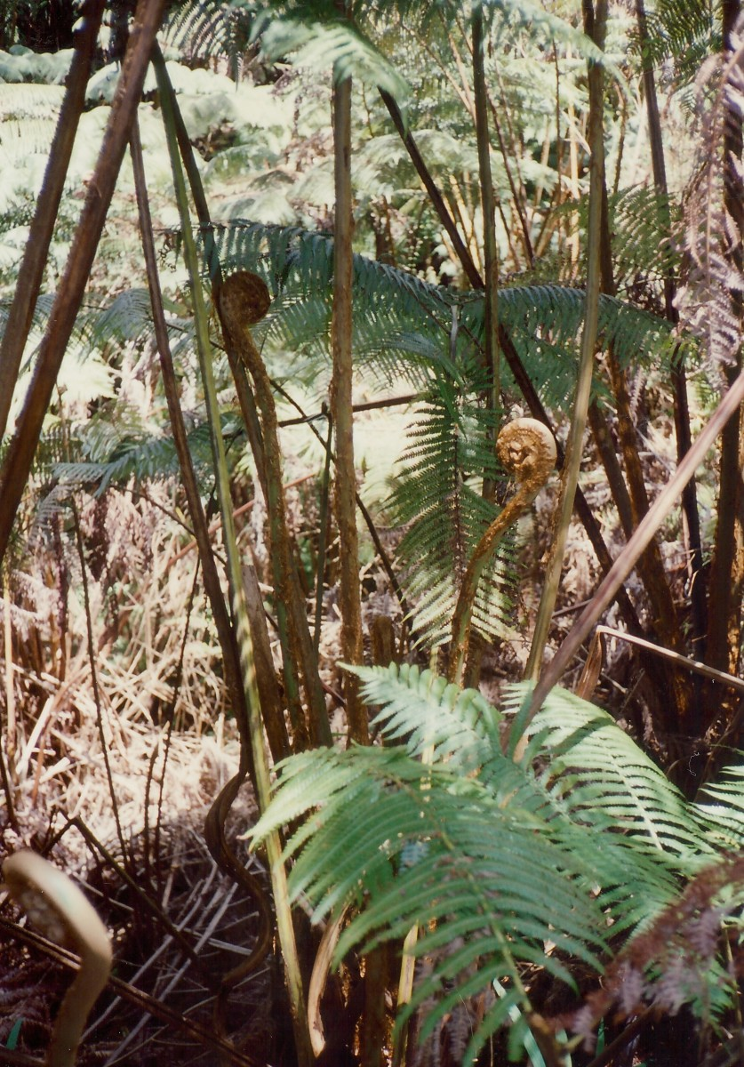 Vegetation outside the lava tube