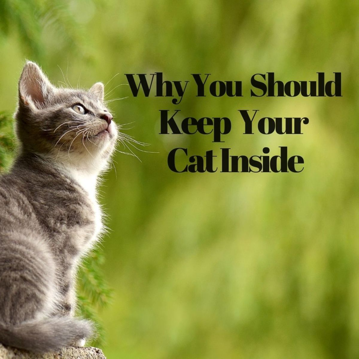 Why you shouldn't let your cat go outside