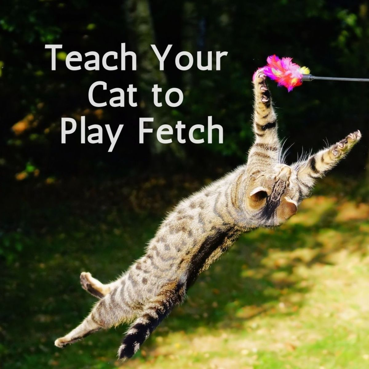 Teaching your cat to play fetch is not as difficult as it seems!