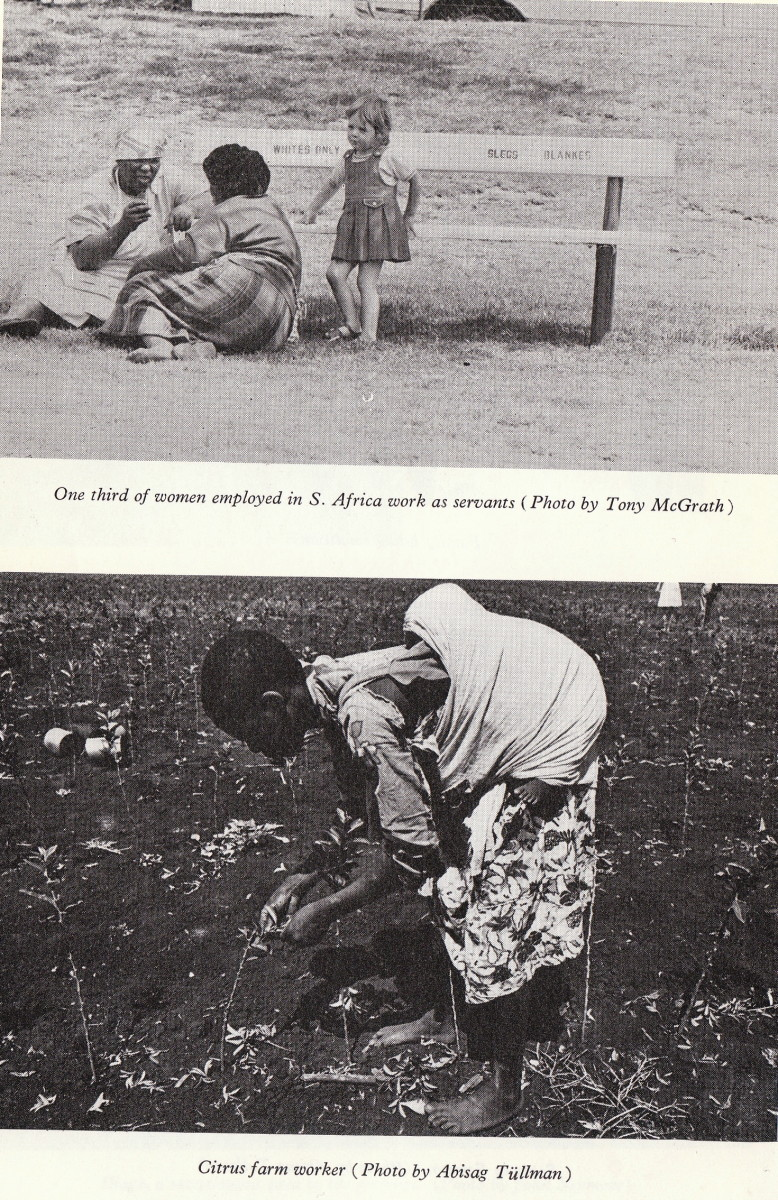 African woman laboring in a citrus with a baby on her back. Many african women worked as domestic servants, others as slaves as seen below with the woman in the citrus field