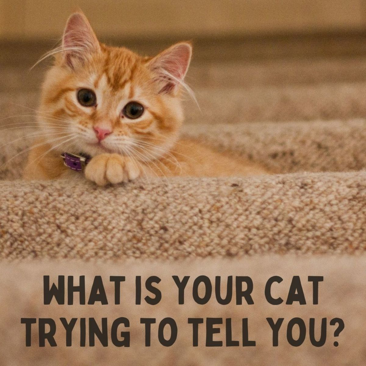 What is your feline friend trying to say?