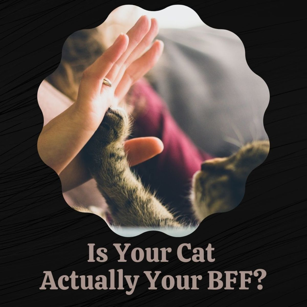 Your cat might be the best friend you'll ever have.