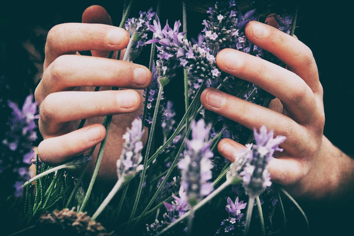Lavender assists in opening the third eye.