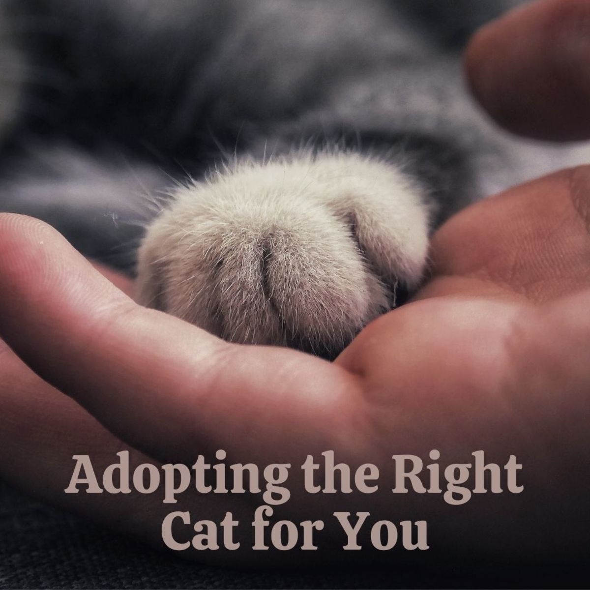 How to find the right cat for you!