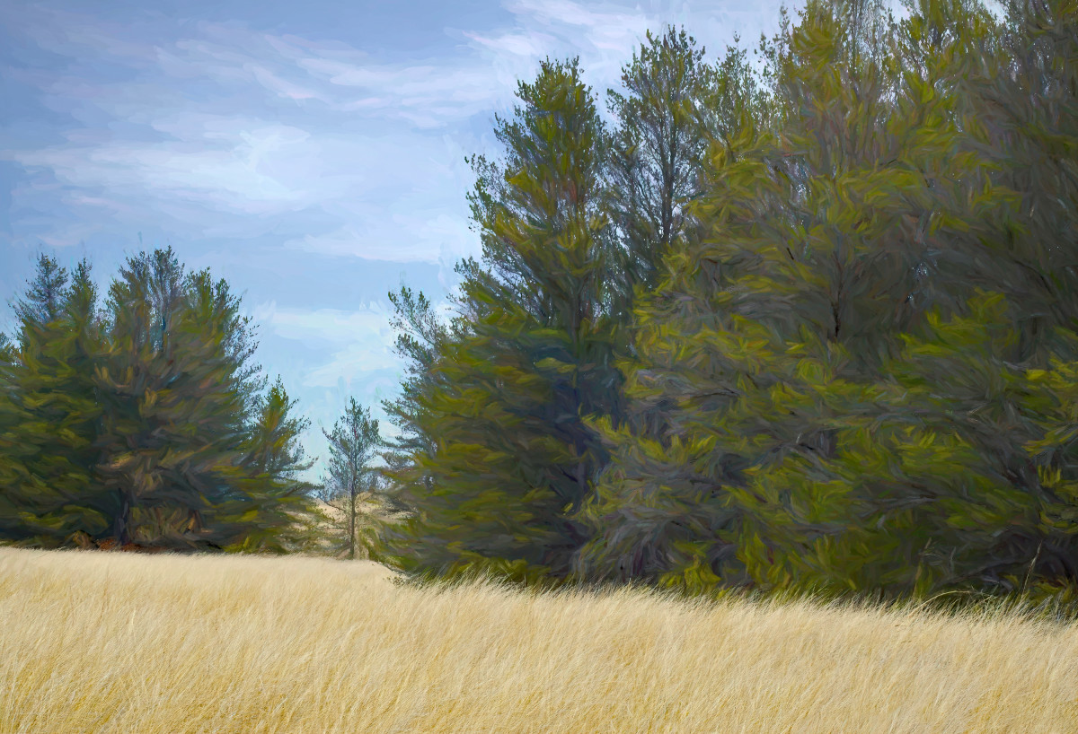 JACK PINE STAND LAKE MICHIGAN SAND DUNES PHOTO DRAWING