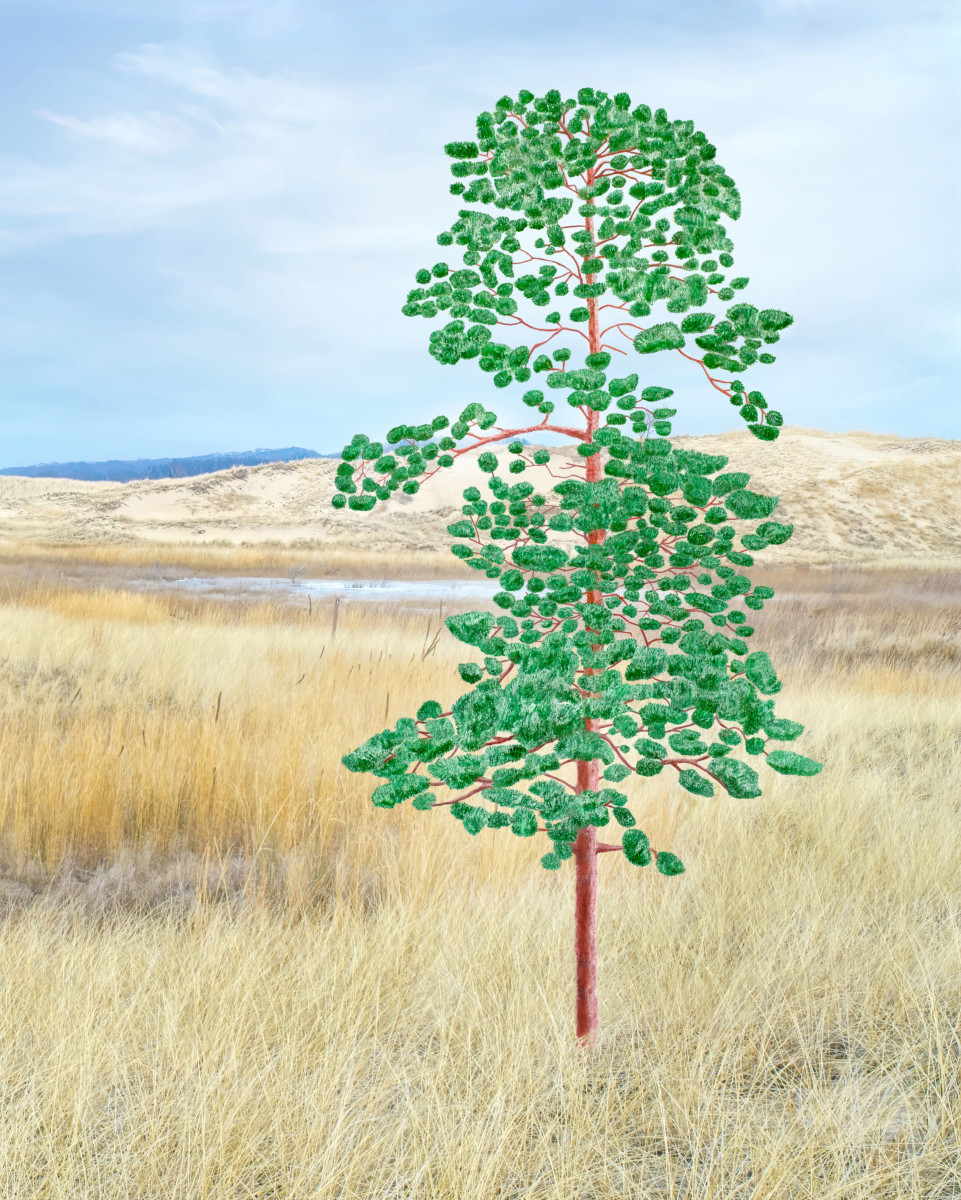 RED PINE TREE PHOTO DRAWING