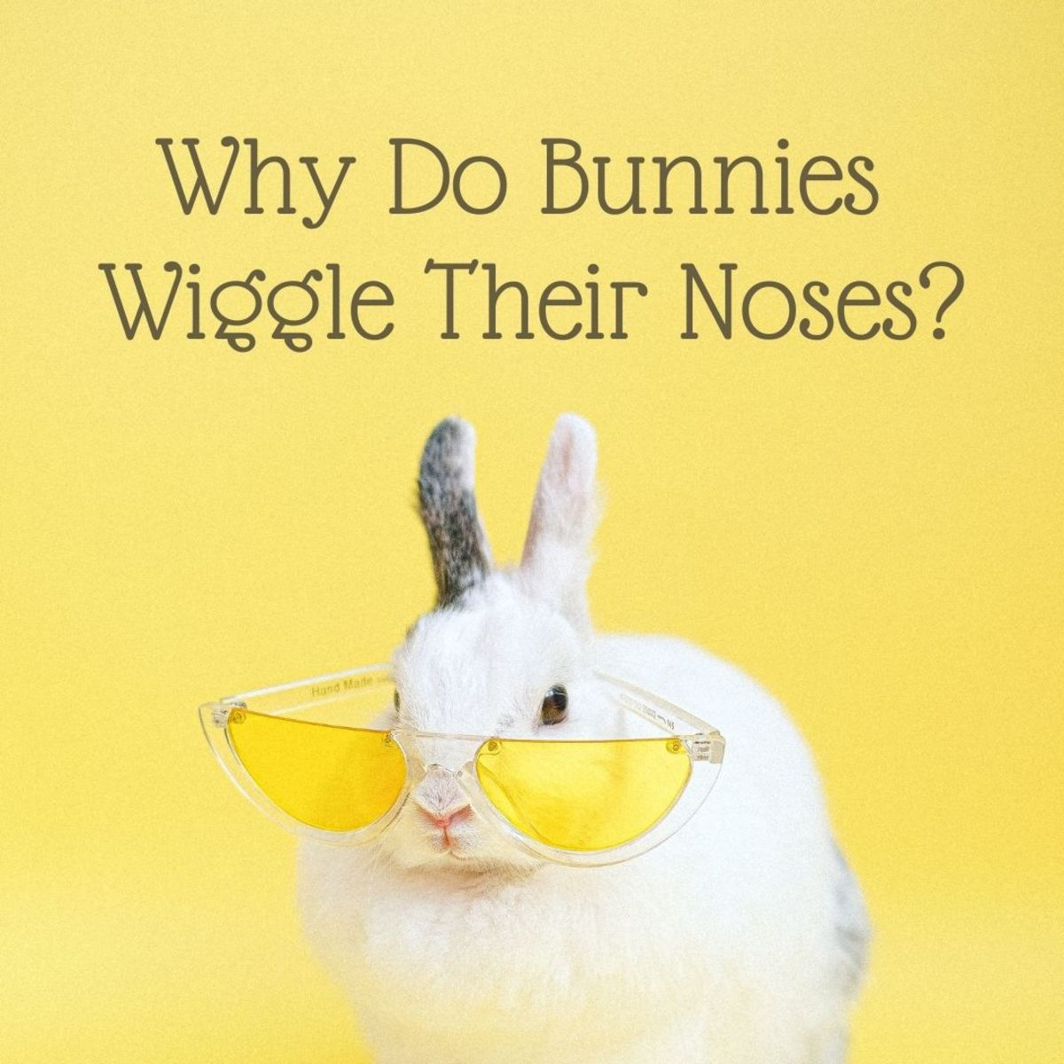 Why do bunnies wiggle and twitch their noses?