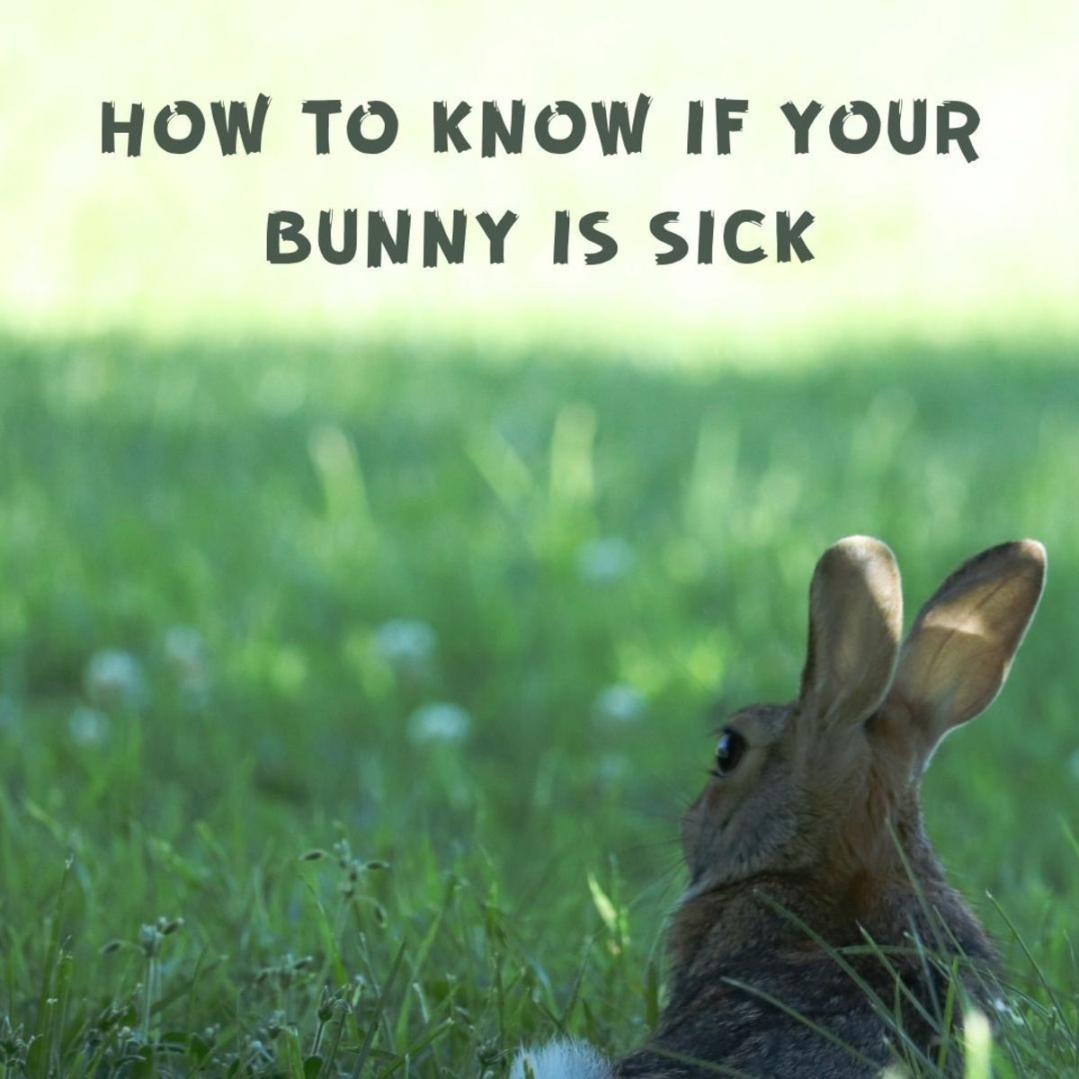 Is My Bunny Sick? 5 Signs It's Time to Go to the Vet
