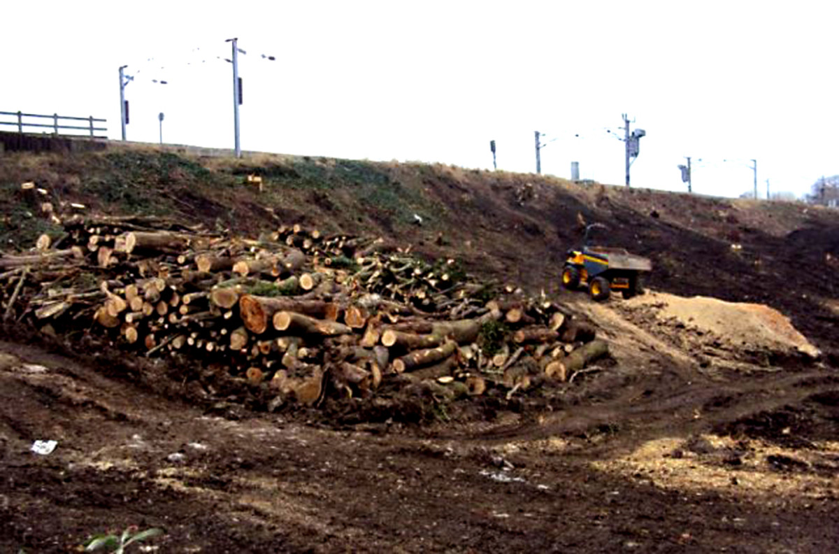 Network Rail Tree Clearance Programme