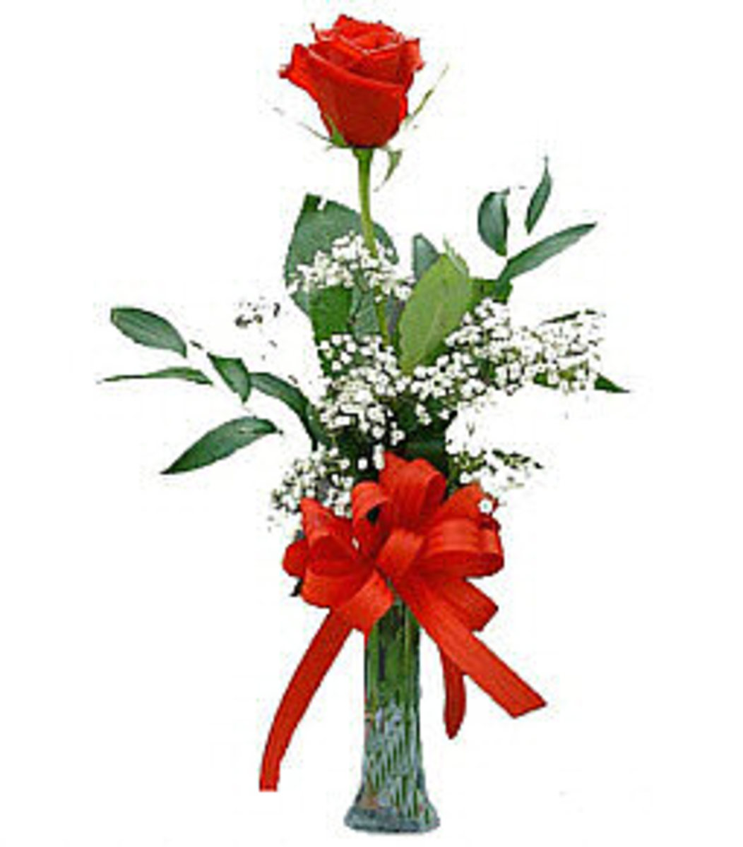 A red rose for Valentine's Day